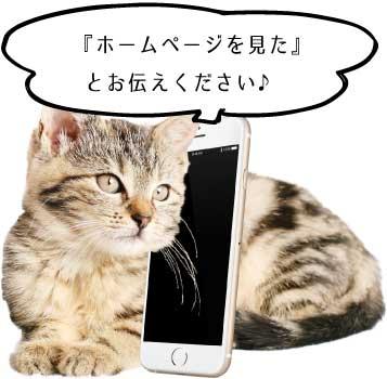 猫と電話の画像